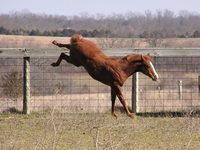 13 steps to stop your horse from bucking