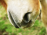 Caring for Horse Breathing Problems