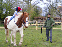 How to Pick a Horse Riding Instructor