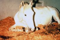 What Are the Treatments for Colic in a Horse?