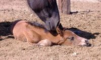 Breathing Problems For Newborn Foals