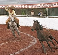 How to Train Your Horse for Roping