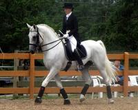 Competing in Horse Dressage – A Guide