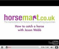 How to catch a horse with Jason Webb