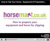 Preparing Your Horse Before Clipping