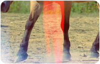 Spotting and treating equine shin splints