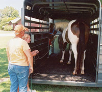 Loading a Show Horse into a Trailer