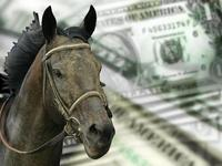 Horse Prices: How Much Does a Horse Cost?