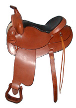 Saddle Training a Horse
