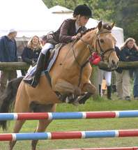 Horse Show Jumping Information