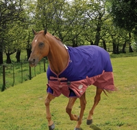 A Guide to Spring and Summer Horse Rugs
