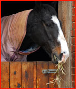 Equine Stable Care