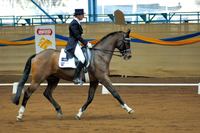 How to Buy a Dressage Horse