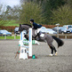 British showjumping training