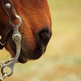 A Guide to Western Bridles