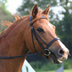 A guide to hunting bridles