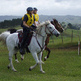 Horse Endurance Riding Information