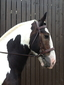 Faldingworth Equestrian Centre