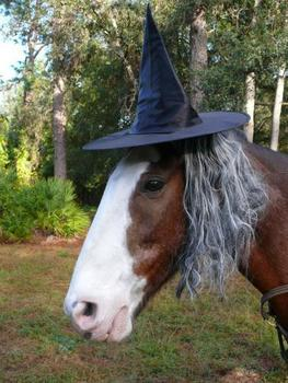 Halloween competition! Win £100 to spend at Equine Superstore!