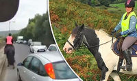 Viewers distraught at bad drivers as horse is killed in shocking footage