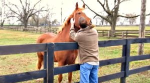 Owner Visits Horses After Being Apart for a Long Time - Their Reaction Is So Sweet