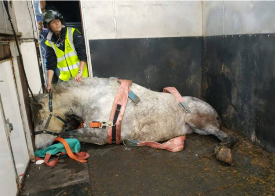 Horse Owner Calls For Law Change After Horse's Leg Goes Through Horsebox Floor