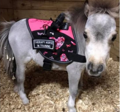 Miniature Horses Are Making Their Way Into The Service Animal Field