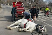 Alarming pictures of 'collapsed' horse sparks public outrage