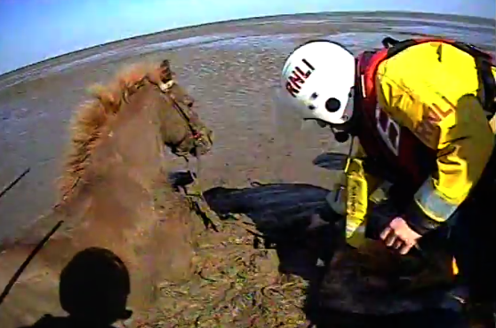 Complicated Rescue Of Horses And Owners Who Got Stuck In The Mud