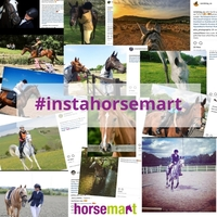Our top #instahorsemart entries so far!