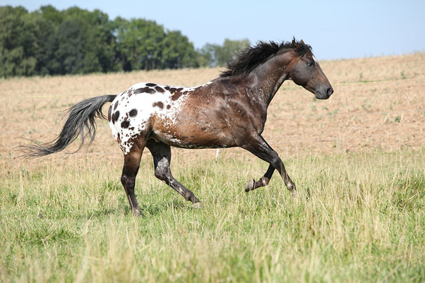 8 striking horses on Horsemart...