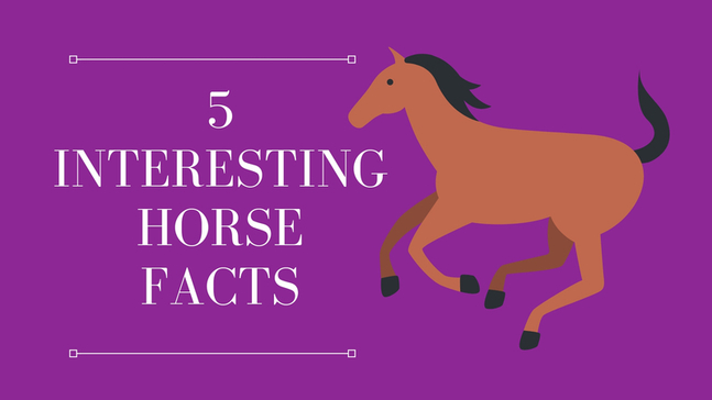 5 Interesting Horse Facts
