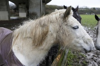 Horses tails cut off by thugs at Shoreham stables