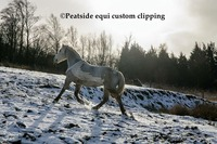 Interview With Award Winning Clip Artist -Peatside Equi Custom Clipping