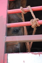 Europe says no to the needless abuse of horses