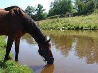Stuck Horse Improves Fire Safety