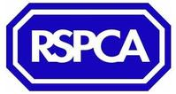 British Horse Society attends RSPCA status dogs summit