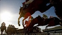 Recession results in slaughter of Ireland's racehorses