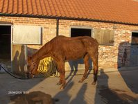 Mother and daughter found guilty of neglecting horse