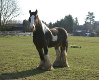 FULL RECOVERY FOR RESCUED STALLION