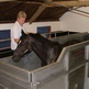 New Equine Sports Rehab Centre Launched