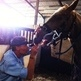 Equine dentistry - Tyde gets a visit from the equine dentist