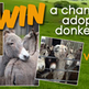 Win a chance to adopt a donkey for a whole year
