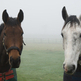 New loose horse scheme to be trailed by Thames Valley Police