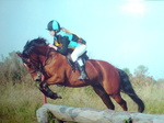 14.2hh 11 years New Forest Gelding